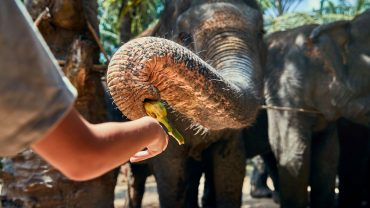 little-boy-feeding-bananas-to-an-asian-elephant-EF44VGG.jpg